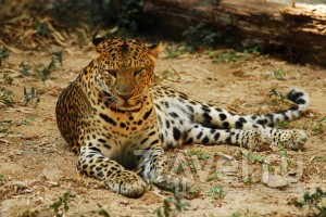 Чиангмайский зоопарк / Таиланд
