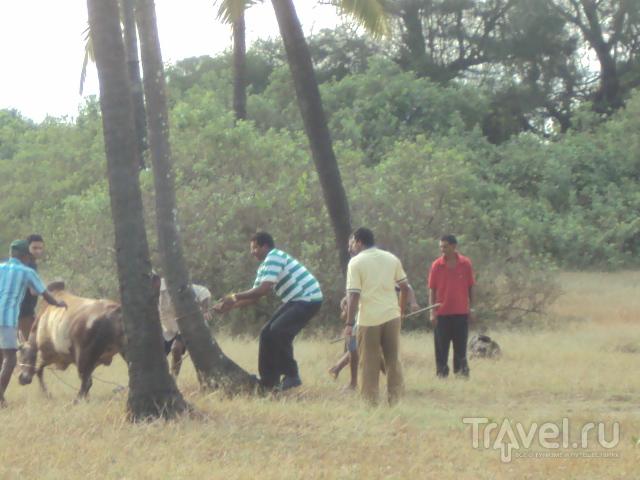 Животные в Индии. Часть первая / Индия