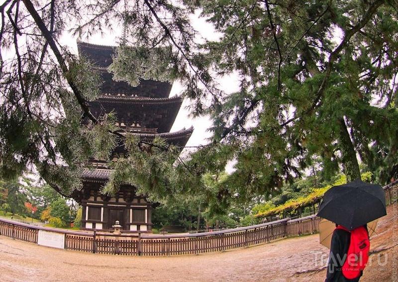 Храм Кофукудзи в Наре / Фото из Японии