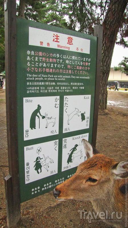 Нара и её олени / Фото из Японии