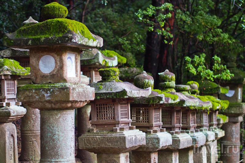 Святилище Касугатайся в Наре / Фото из Японии
