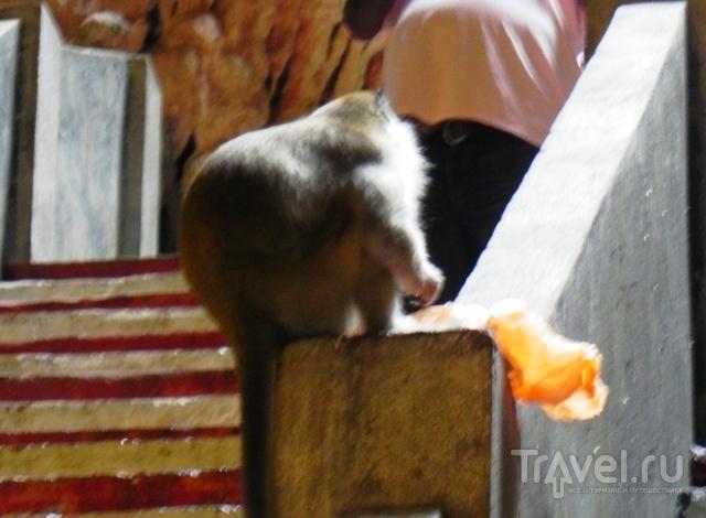 Схватки с обезьянами в пещерах Бату / Малайзия