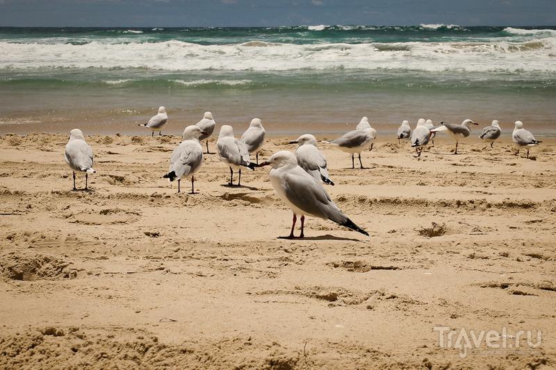 Голд-Кост, Австралия / Австралия