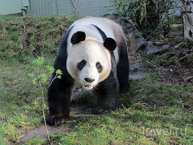 Зимняя прогулка по зоопарку Эдинбурга / Фото из Великобритании