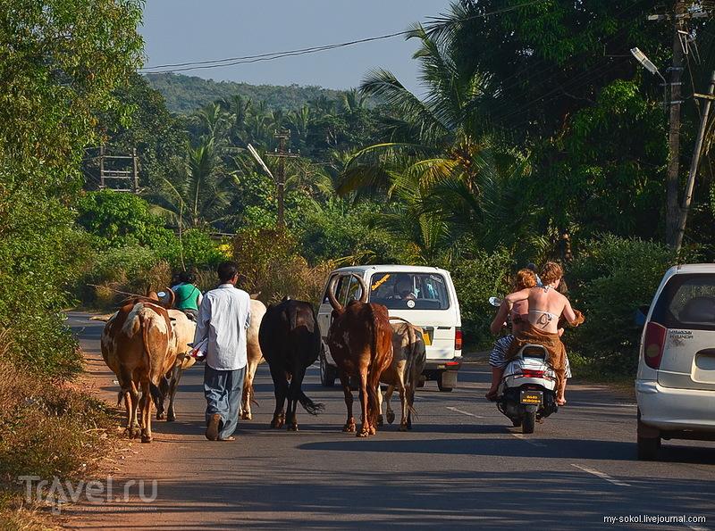 Большой отчет о Гоа / Фото из Индии