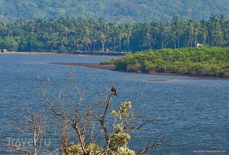 В заповеднике Котигао, Индия / Фото из Индии