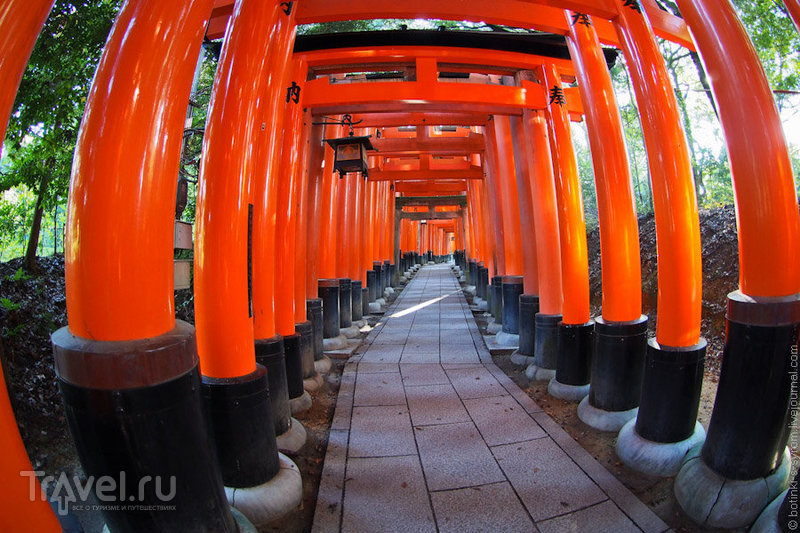 Ворота святилища Фушими Инари / Фото из Японии
