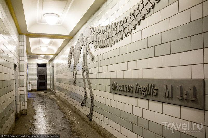 Станция метро Naturkundemuseum (Натуркунденмузеум), Берлин / Фото из Германии