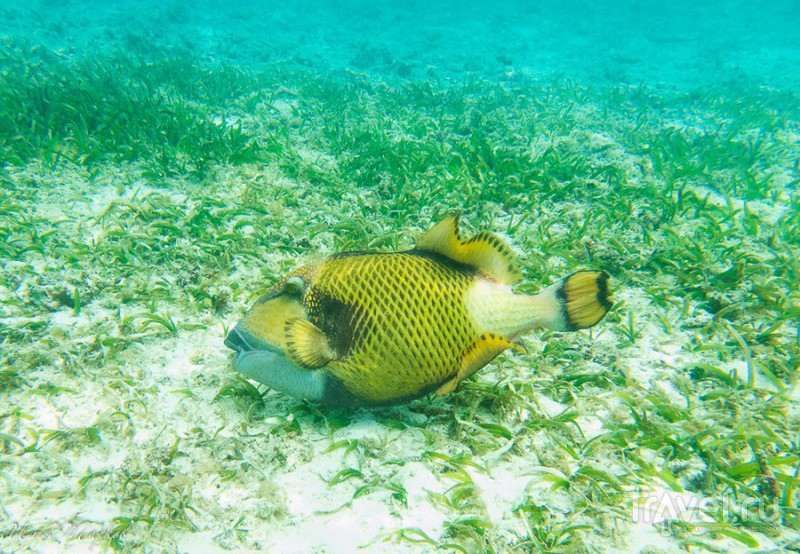 Мальдивы. Под водой / Фото с Мальдив