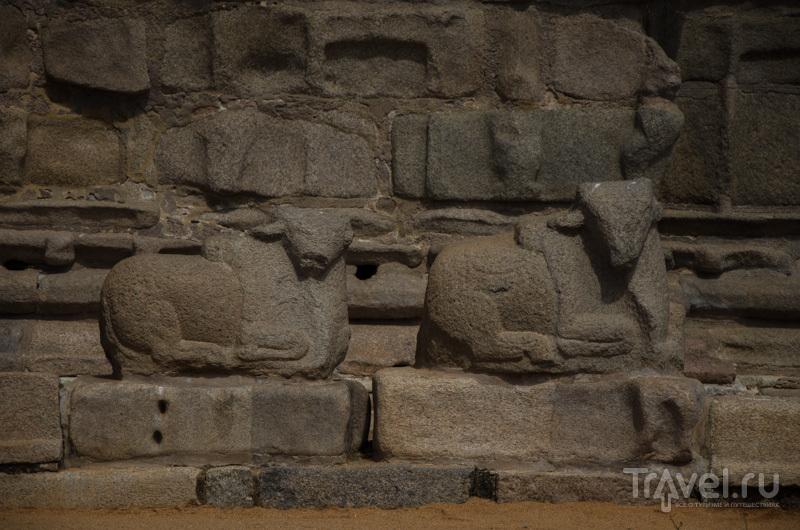 Shore Temple в Махабалипураме / Фото из Индии