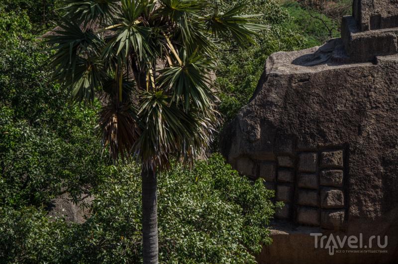 Восточное побережье Индии на Новый год. Тамилнад и Путтуччери / Фото из Индии
