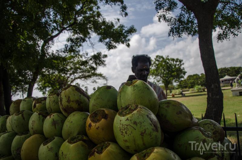 Кокосы / Фото из Индии