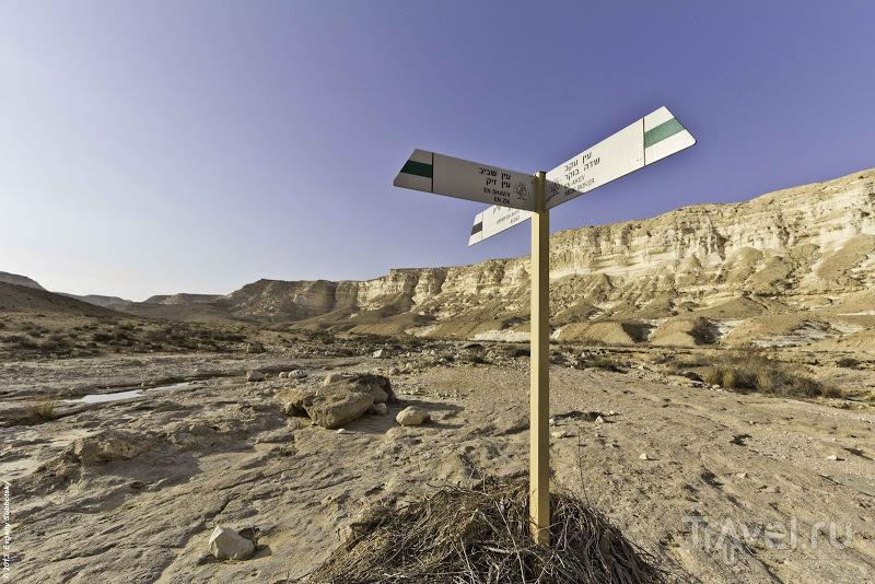 """""""Как мы отменили выборы"""" или """"Мы выбираем пустыню!"""" / Фото из Израиля"""