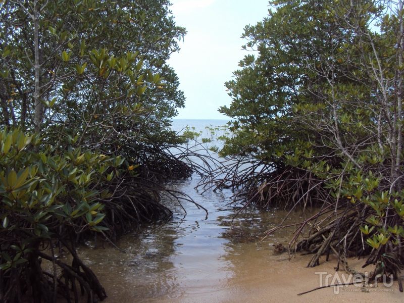 """Ко-Панган. """"Мангровый"""" пляж / Таиланд"""