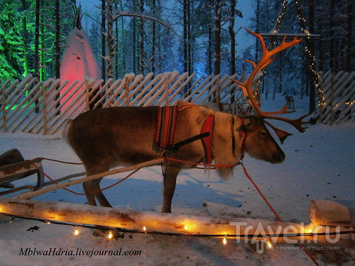 Лапландия. Квинтэссенция зимы / Финляндия