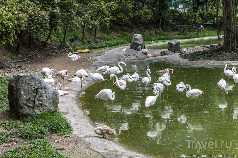 Парк птиц в Куала-Лумпуре / Фото из Малайзии