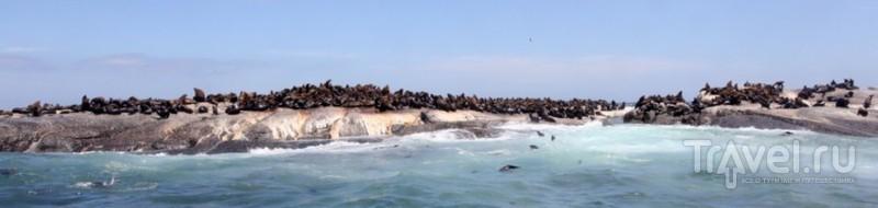 Морские Котики в Кейптауне / ЮАР