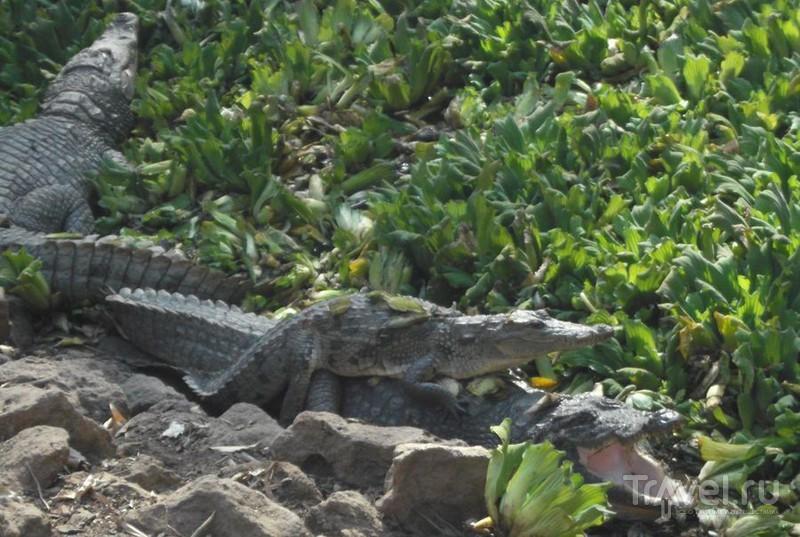 Серекунда туристическая. Вяленая рыба и другие животные / Гамбия