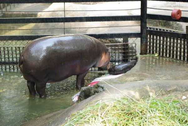 Зоопарк Кхао Кео / Таиланд