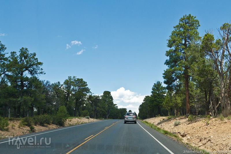 USA Wedding Trip: Тусаян - туристические ворота Гранд-Каньона / Фото из США
