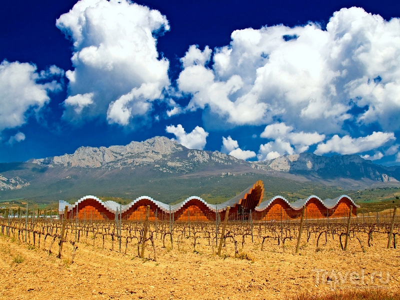 Дизайнерская винодельня Bodegas Ysios, построенная архитектором Сантьяго Калатравой / Испания