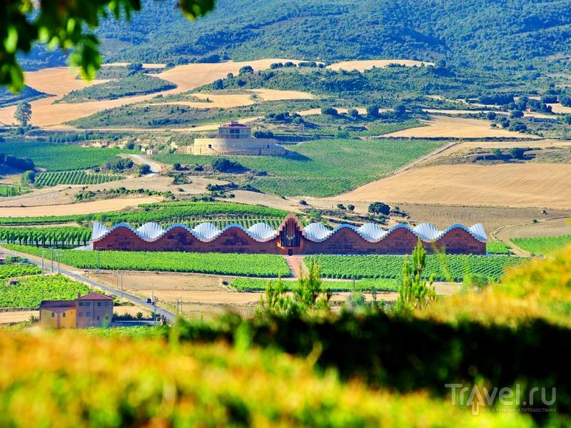 Виноградники окружает горная цепь Сьерра-де-Кантабрия / Испания