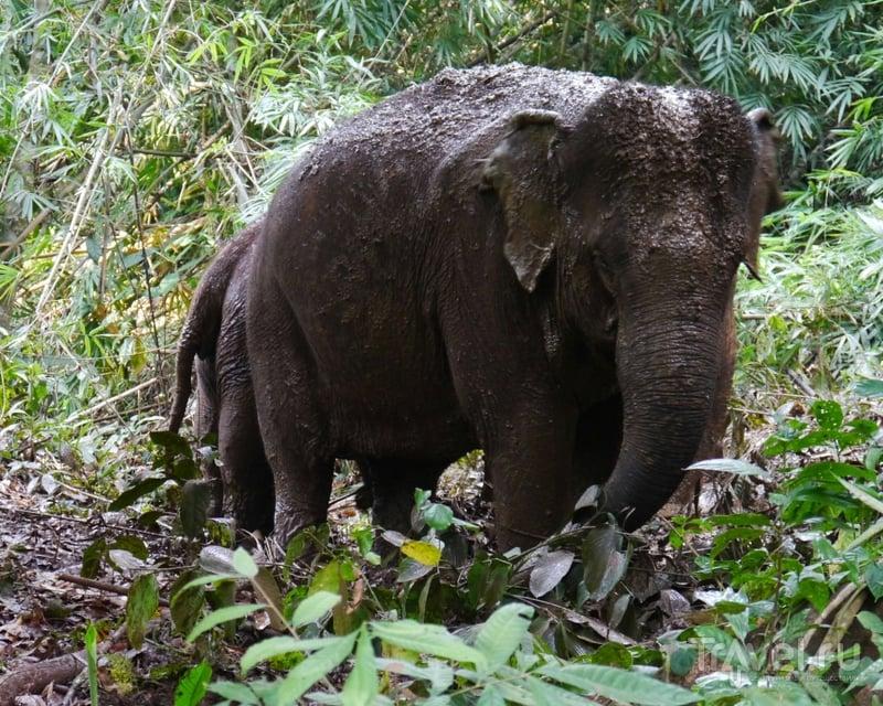 Слоны на пенсии. Камбоджа / Камбоджа