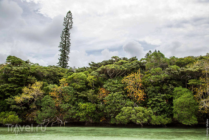 Новая Каледония: путешествие по французской Океании / Фото из Новой Каледонии