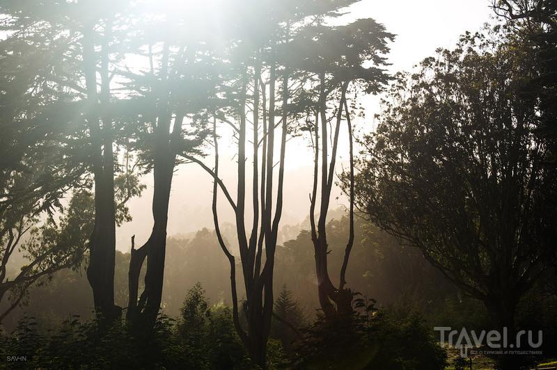 Город солнца. Сан-Франциско / Фото из США