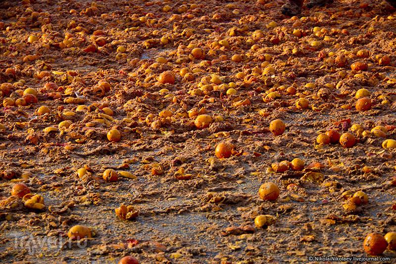 Апельсиновая бойня / Италия