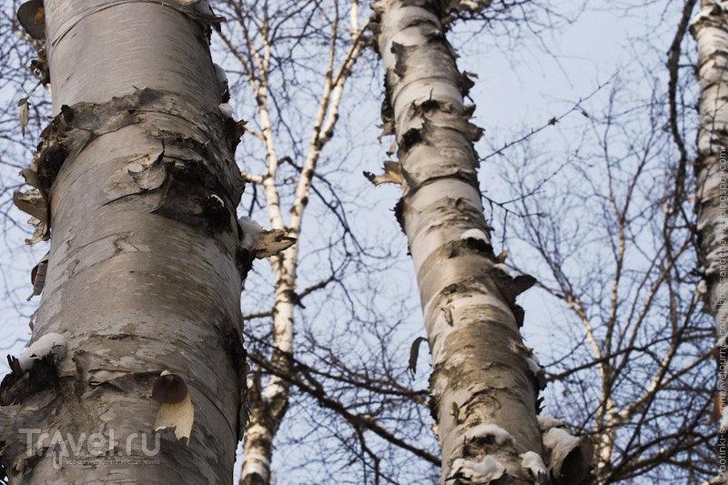 Избушка в квебекском лесу / Фото из Канады