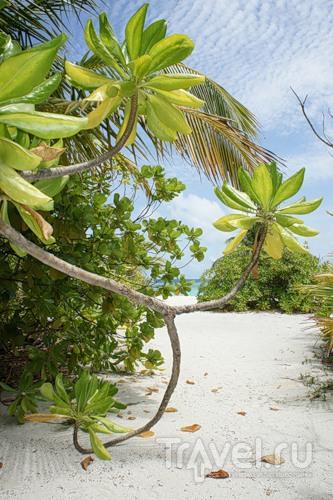 """Мальдивы - жизнь по концепции """"no news, no shoes"""" / Мальдивы"""