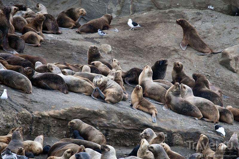 Пунта-Аренас и фауна Магелланова пролива / Фото из Чили