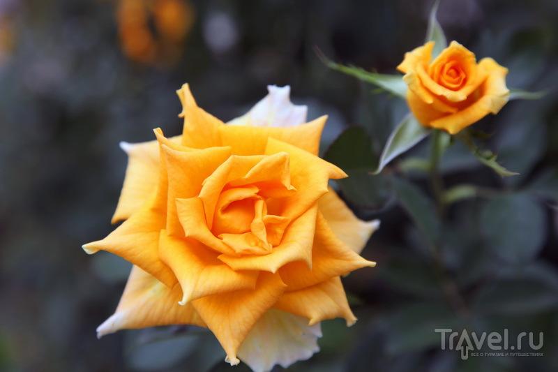 Чеченские розы / Фото из России