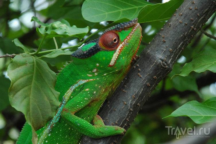 Как попасть на остров Гран Митсио с Мадагаскара / Мадагаскар
