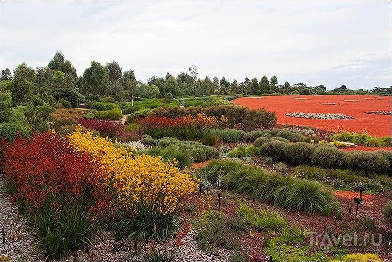 Королевский ботанический сад в Кренбурне, Австралия / Фото из Австралии