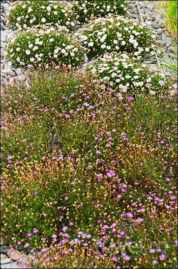 Royal Botanic Gardens, Cranbourne, Australia / Фото из Австралии