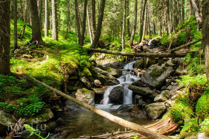 Река Прут в Карпатском биосферном заповеднике, Украина / Фото с Украины