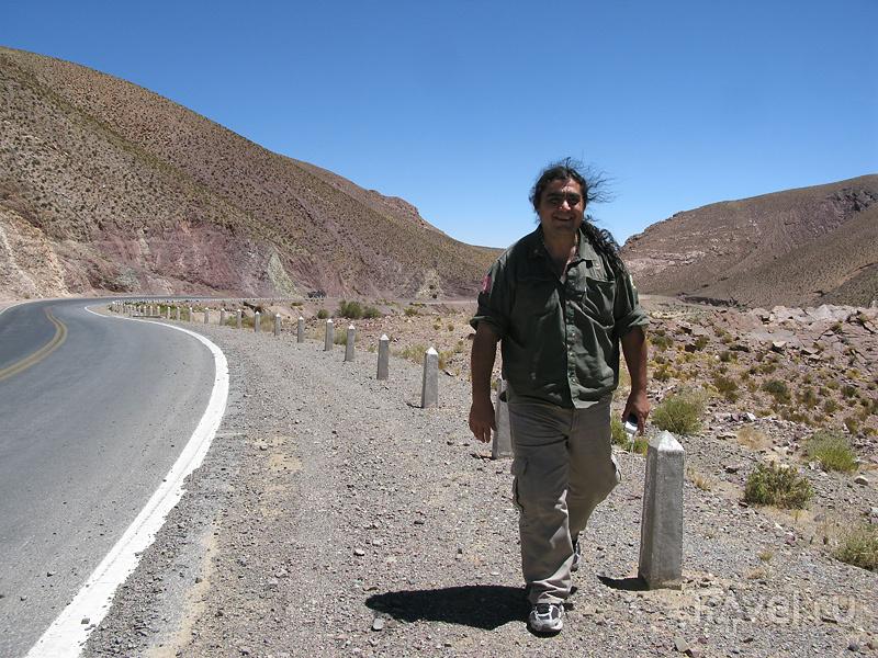 Викуньи и гуанаки / Фото из Аргентины