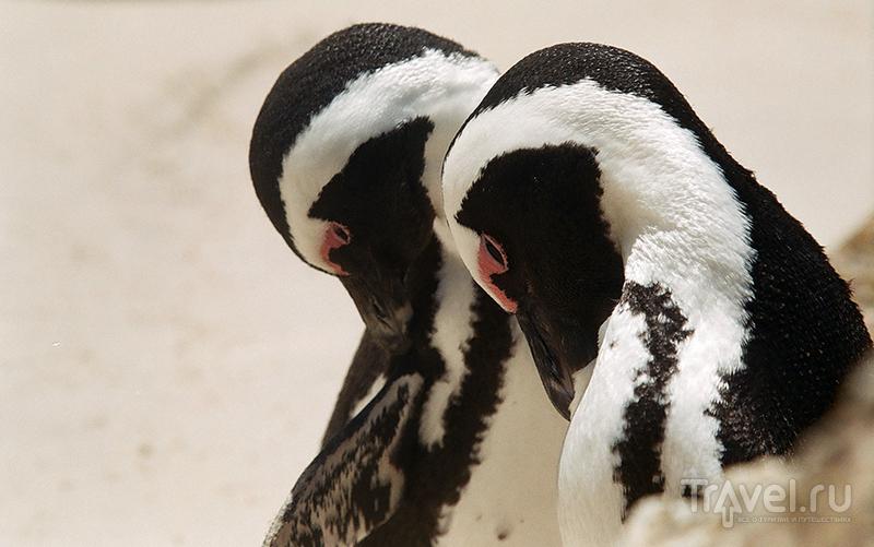 Африканские Пингвины под водой / ЮАР