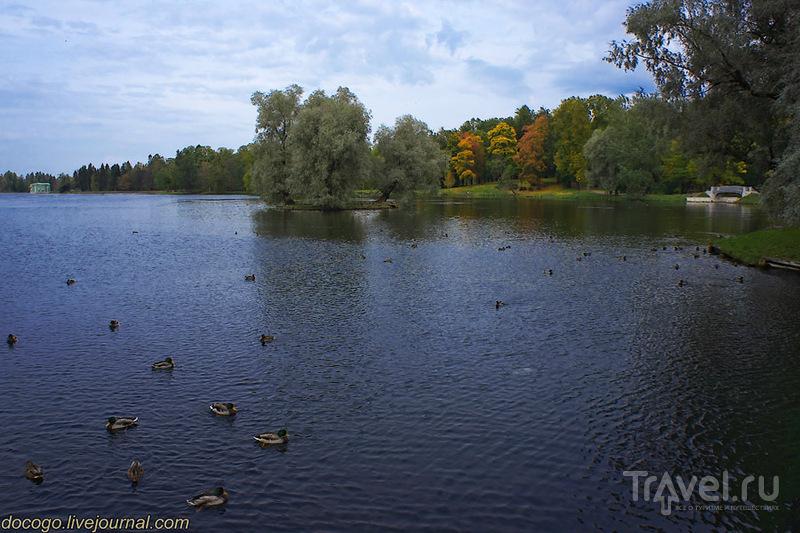 Гатчина. В первую очередь / Фото из России