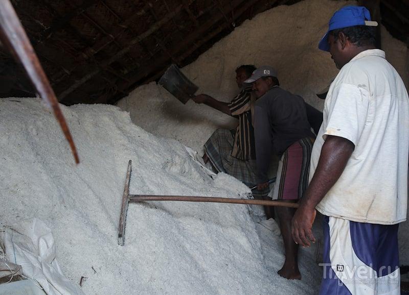 Добыча соли в Путталаме / Фото со Шри-Ланки