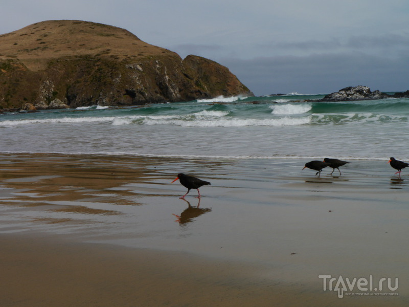 На краю света. Кэтлинс, Новая Зеландия / Фото из Новой Зеландии