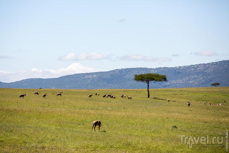 Парк Масаи-Мара, Кения / Фото из Кении