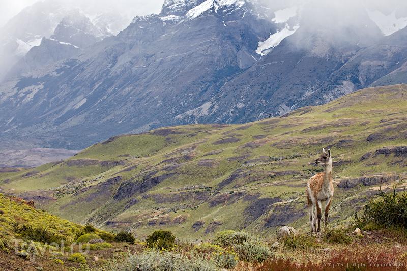 В парке Торрес-дель-Пайне, Чили / Фото из Чили