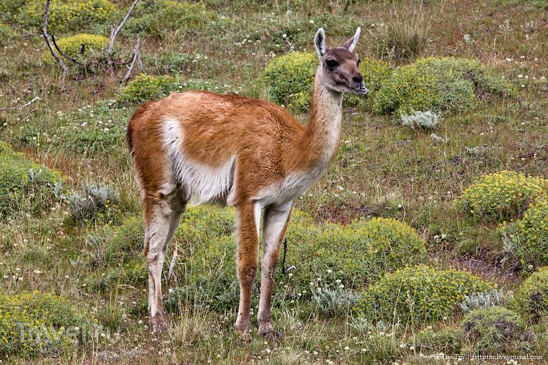 Восхождение к Голубым башням и животный мир Южной Патагонии / Фото из Чили