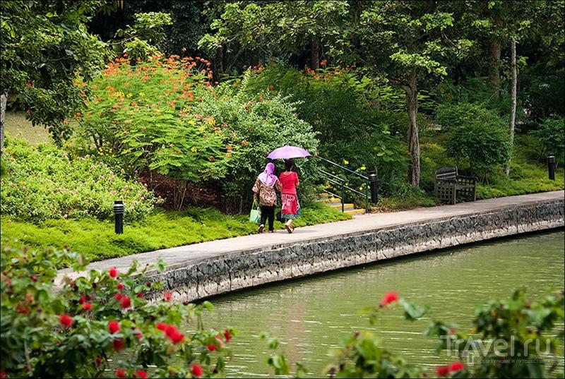 В ботаническом саду Сингапура / Фото из Сингапура