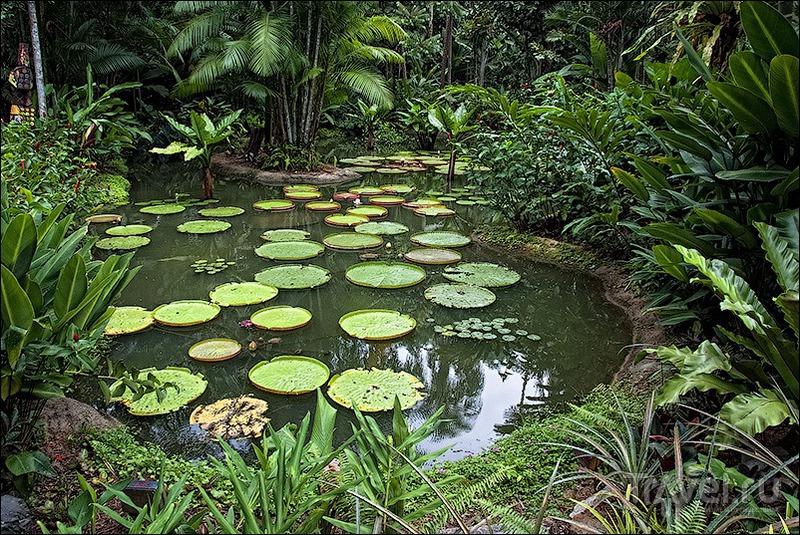 Сингапур: ботанический сад и орхидеи / Фото из Сингапура