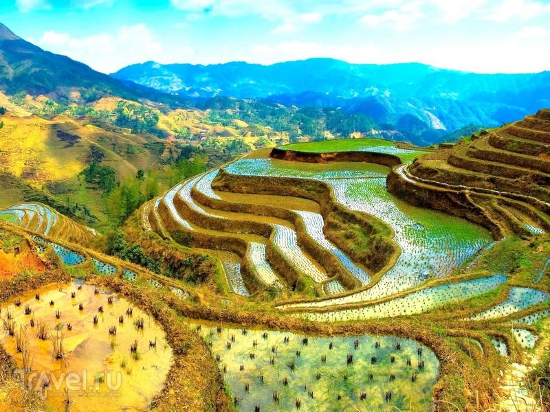 Рисовые террасы - национальное достояние Филиппинского архипелага / Филиппины