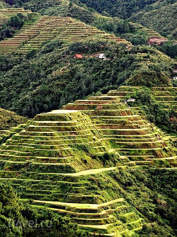 """Рисовые террасы на склонах Кордильер - масштабный сельскохозяйственный """"проект"""" / Филиппины"""